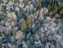 Bosque del invierno en una mañana soleada fría imágenes de archivo libres de regalías