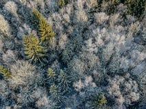 Bosque del invierno en una mañana soleada fría fotografía de archivo