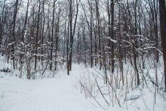 Bosque del invierno en una nieve nublada del día Imágenes de archivo libres de regalías