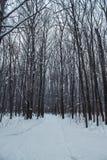 Bosque del invierno en una nieve nublada del día Imagenes de archivo