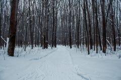 Bosque del invierno en una nieve nublada del día Fotografía de archivo