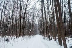 Bosque del invierno en una nieve nublada del día Foto de archivo