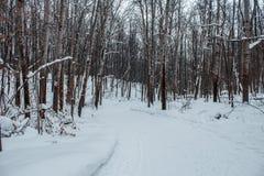 Bosque del invierno en una nieve nublada del día Imagen de archivo