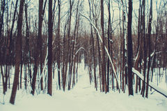 Bosque del invierno en una nieve nublada del día Fotos de archivo libres de regalías
