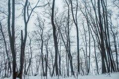 Bosque del invierno en una nieve nublada del día Imagen de archivo libre de regalías