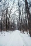 Bosque del invierno en una nieve nublada del día Fotos de archivo