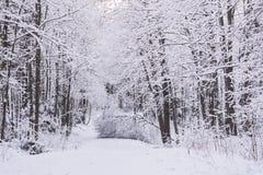 Bosque del invierno del milagro cubierto por la nieve Foto de archivo libre de regalías