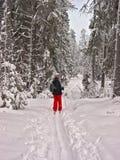 Bosque del invierno. Mujer feliz imagenes de archivo