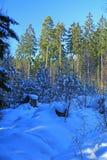 Bosque del invierno Nevado fotos de archivo libres de regalías
