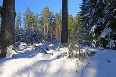 Bosque del invierno Nevado foto de archivo libre de regalías