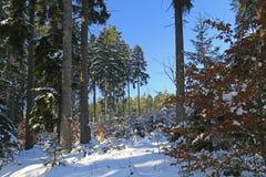 Bosque del invierno Nevado imagen de archivo