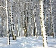 Bosque del invierno Nevado Imágenes de archivo libres de regalías