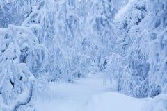 Bosque del invierno Nevado Fotografía de archivo
