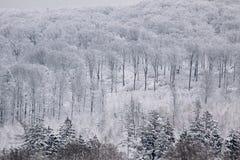 Bosque del invierno Nevado en el Taunus Imagen de archivo libre de regalías