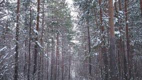 Bosque del invierno del pino almacen de metraje de vídeo