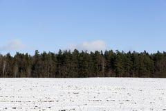 Bosque del invierno, primer Foto de archivo