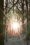 Bosque del invierno, primer Imagen de archivo