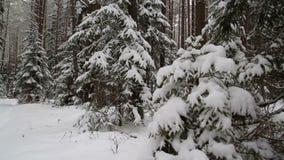 Bosque del invierno, resbalador almacen de video