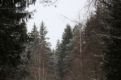 Bosque del invierno, Rusia Fotos de archivo