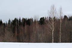 Bosque del invierno, Rusia Imagen de archivo libre de regalías