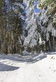 Bosque del invierno y camino helado Imagen de archivo libre de regalías