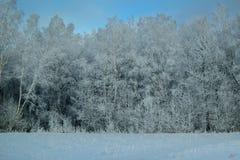 bosque del invierno y campo nevado Imágenes de archivo libres de regalías
