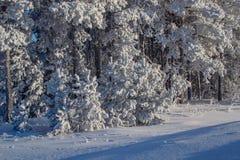 bosque del invierno y campo nevado Foto de archivo libre de regalías