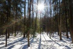 Bosque del invierno y tiempo soleado foto de archivo libre de regalías