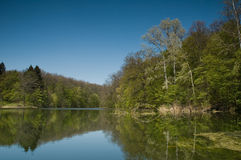 Bosque del lago Fotografía de archivo libre de regalías