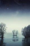 Bosque del lago night Foto de archivo