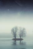 Bosque del lago night Imagenes de archivo