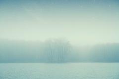 Bosque del lago night Imagen de archivo