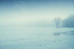 Bosque del lago night Imágenes de archivo libres de regalías