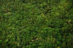Bosque del laurel en las islas Canarias Fotografía de archivo