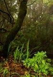 Bosque del laurel en las islas Canarias Imagenes de archivo