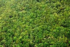 Bosque del laurel en las islas Canarias Foto de archivo