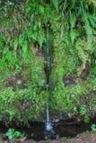 Bosque del laurel en Madeira imagenes de archivo
