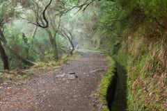 Bosque del laurel en Madeira imágenes de archivo libres de regalías