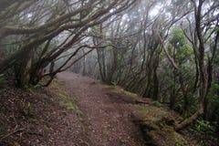 Bosque del laurel en Tenerife Imagen de archivo