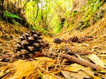 Bosque del Los Tilos, La Palma Fotos de archivo libres de regalías