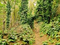 Bosque del Los Tilos, La Palma Imágenes de archivo libres de regalías