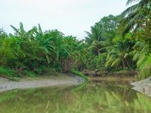 Bosque del mangle con el barco que corre en Can Tho, delta del Mekong, al sur de Vietnam Fotos de archivo libres de regalías