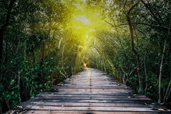 Bosque del mangle con el puente de la calzada y las hojas de madera del árbol Fotografía de archivo