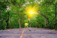 Bosque del mangle con el puente de la calzada y las hojas de madera del árbol Fotografía de archivo libre de regalías