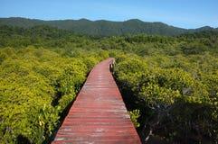 Bosque del mangle con la manera de madera del paseo Imagenes de archivo