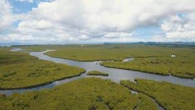 Bosque del mangle en Asia almacen de video