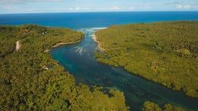 Bosque del mangle en Asia almacen de metraje de vídeo