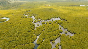Bosque del mangle en Asia Isla de Filipinas Siargao almacen de video