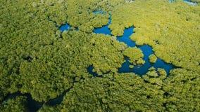 Bosque del mangle en Asia Isla de Filipinas Siargao metrajes
