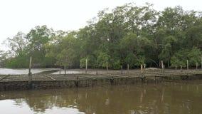 Bosque del mangle en el estuario del río el ambiente de la naturaleza del mar de la conservación almacen de video